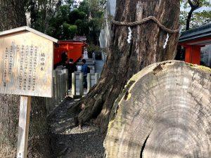 楠の神木について