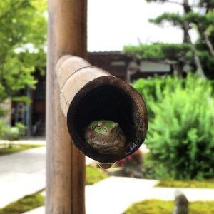お寺の庭園